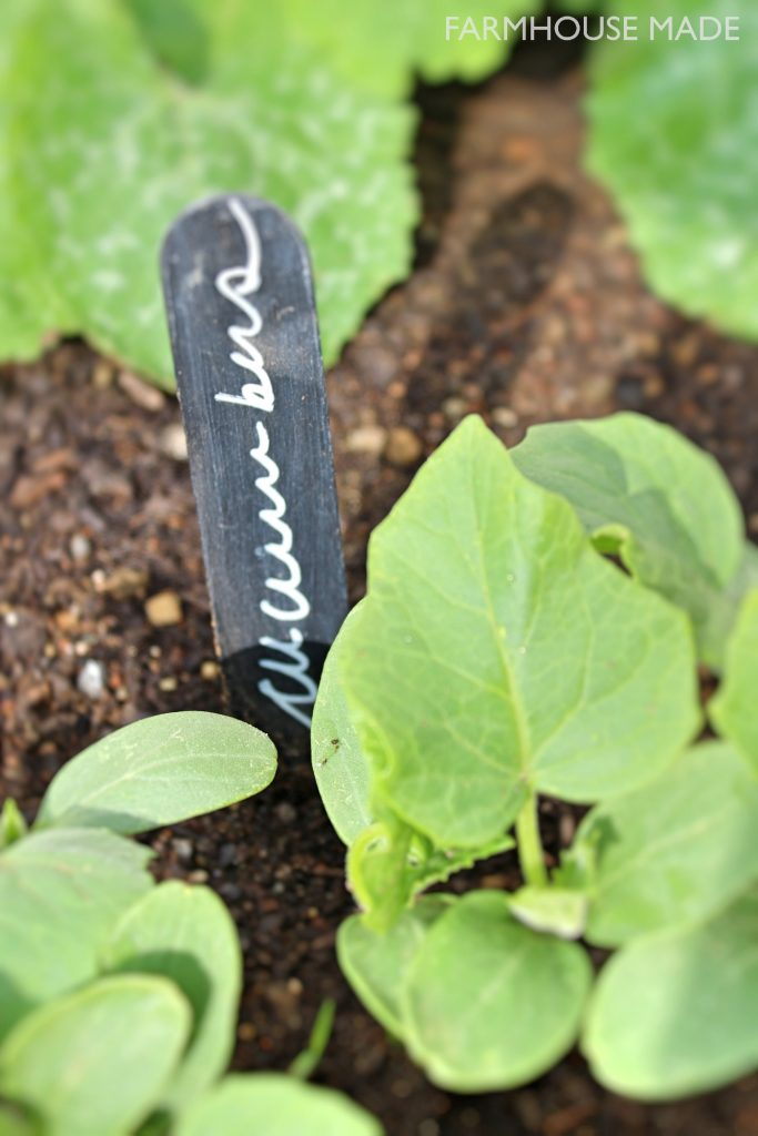 Check out these adorable diy plant markers! Gotta make a whole set for the veggies!