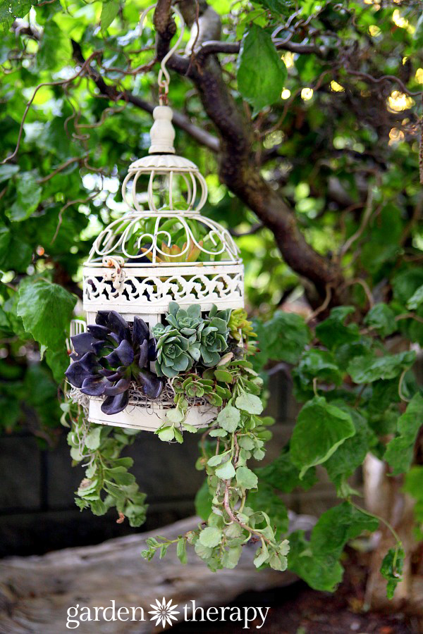 Make a gorgeous unique birdcage planter!