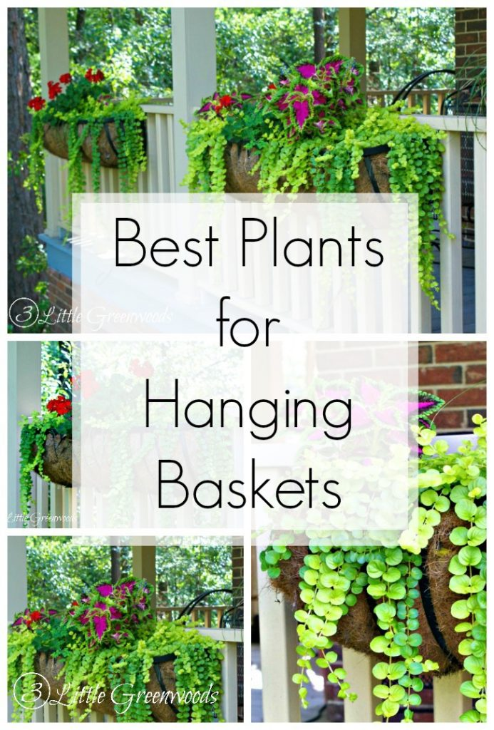 Porch And Deck Planter Ideas Or Where My Good Floral